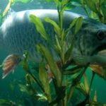 Тонкости осенней рыбалки. Ловля щуки