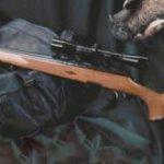 Основные правила получения разрешения на охотничье ружье
