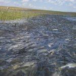 Захватывающая рыбалка в Астрахани: готовимся к отдыху