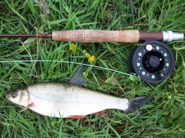 Подуст обыкновенный. Рыбалка. Рыба